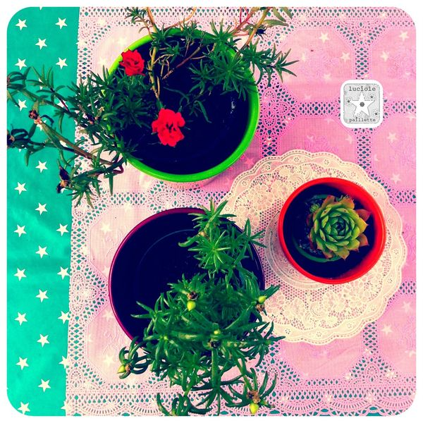 plantes grasses2