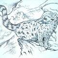 Genette Mammière carnivore vivérridé