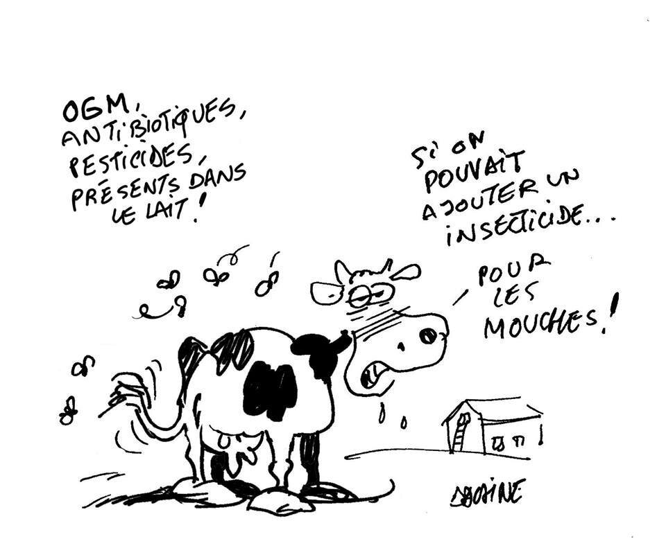environnement vache lait humour monsento
