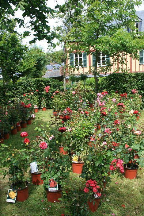 Fête Ecurie du Val Fête de la rose à Veules 247