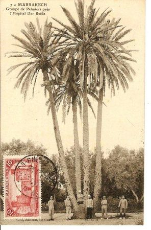 7_MARRAKECH_Groupe_de_Palmiers_pr_s_de_l_H_pital_Dar_Be_da_Sancan