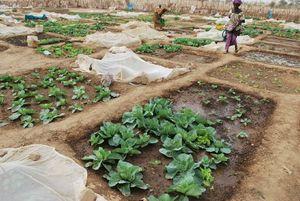 Les Femmes travaillent au jardin - Février 2012