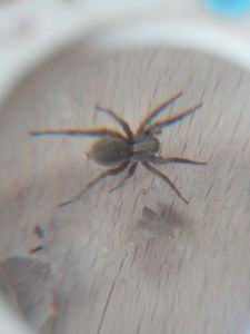 10 - araignée