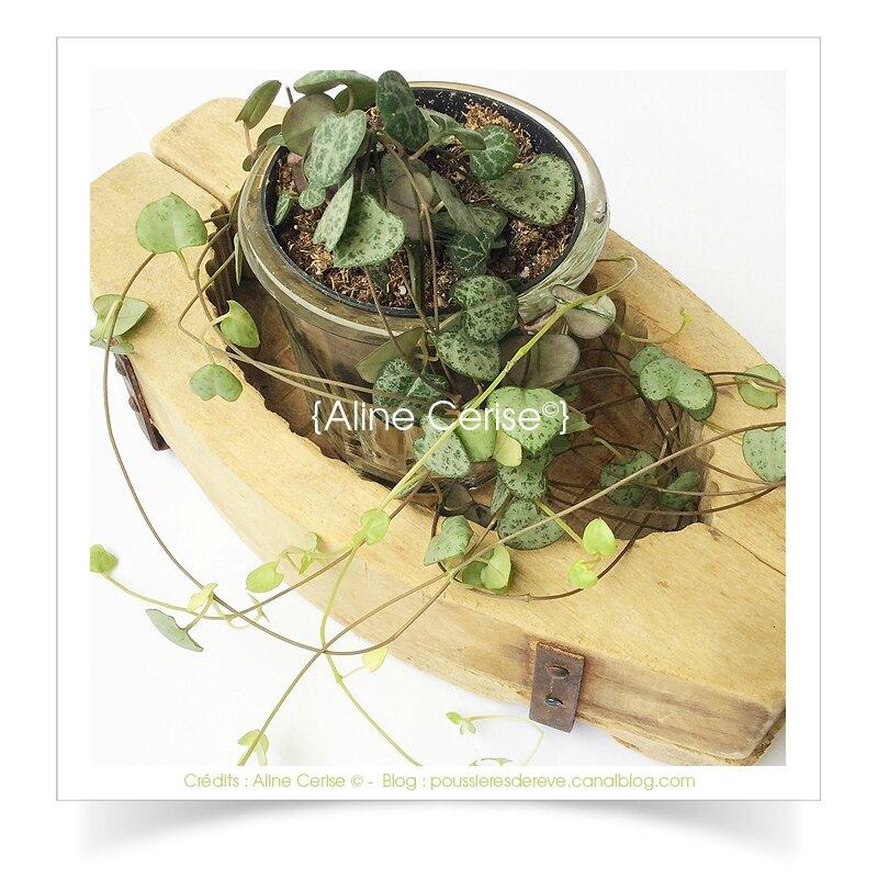 plante2A