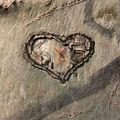 41-Coeur ds un tronc_8088a