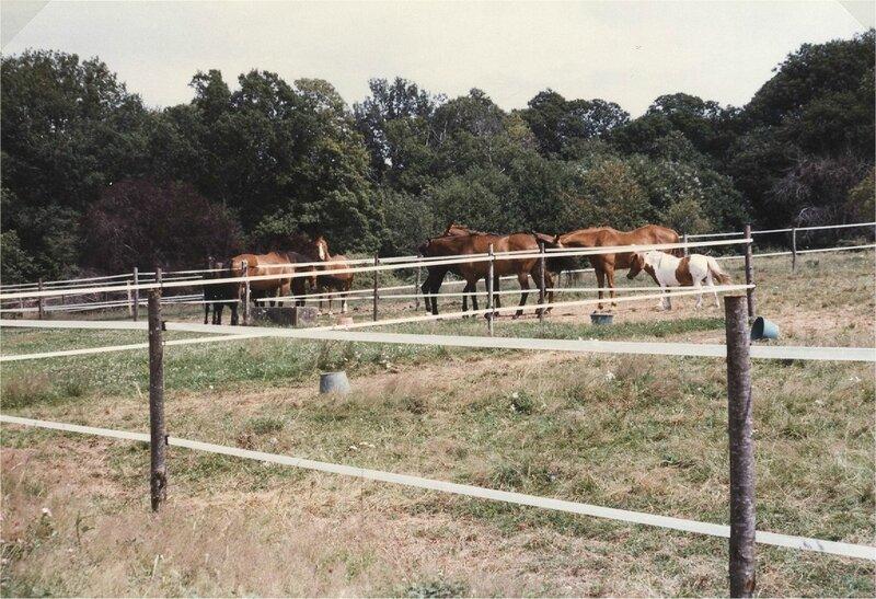 chevaux à Vigier
