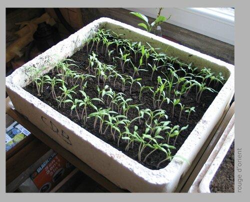 faire ses semis et comptabiliser ses graines rouge d 39 orient. Black Bedroom Furniture Sets. Home Design Ideas