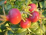 Fruits_rosier