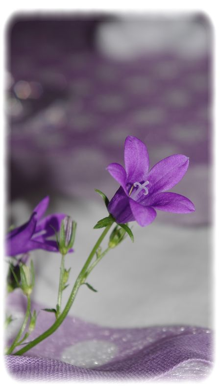 table_mauve_043_modifi__1