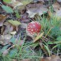 Trésor d'automne empoisonné ? (merci Agapanthe!!)
