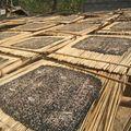 Des algues en forme de galettes sèchent pour etre mangées