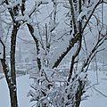 18/02/16 : dans les alpes # 2