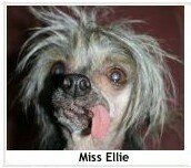 Miss_Ellie