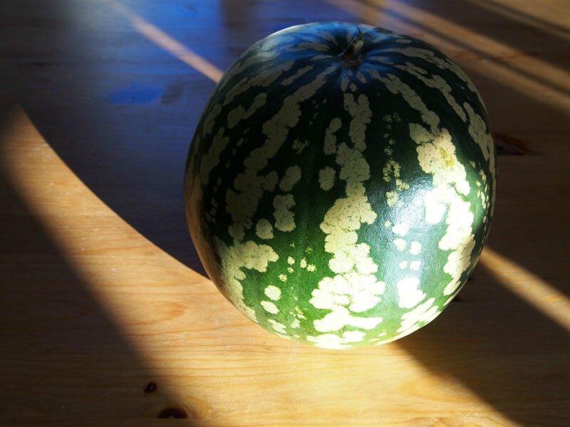 3265_melon d eau