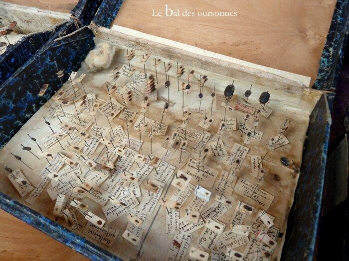 80 Brocante Vide-grenier ville Lyon Insecte naturalisés