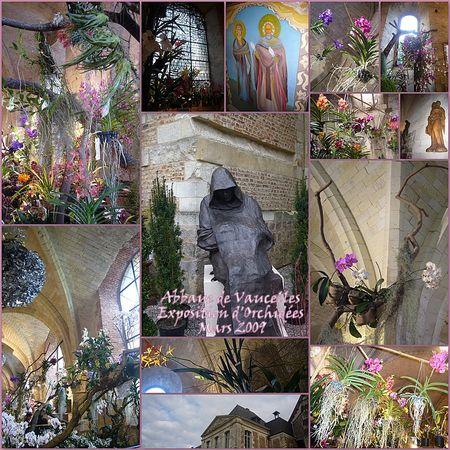 Exposition_des_Orchid_es_Abbaye_de_Vaucelles_03_20091