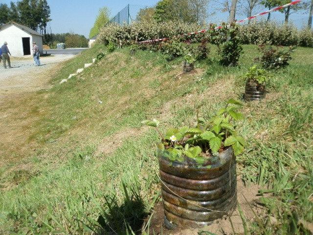 plantation de fraisiers et explications avec les visiteurs le petit jardin de langu dias. Black Bedroom Furniture Sets. Home Design Ideas