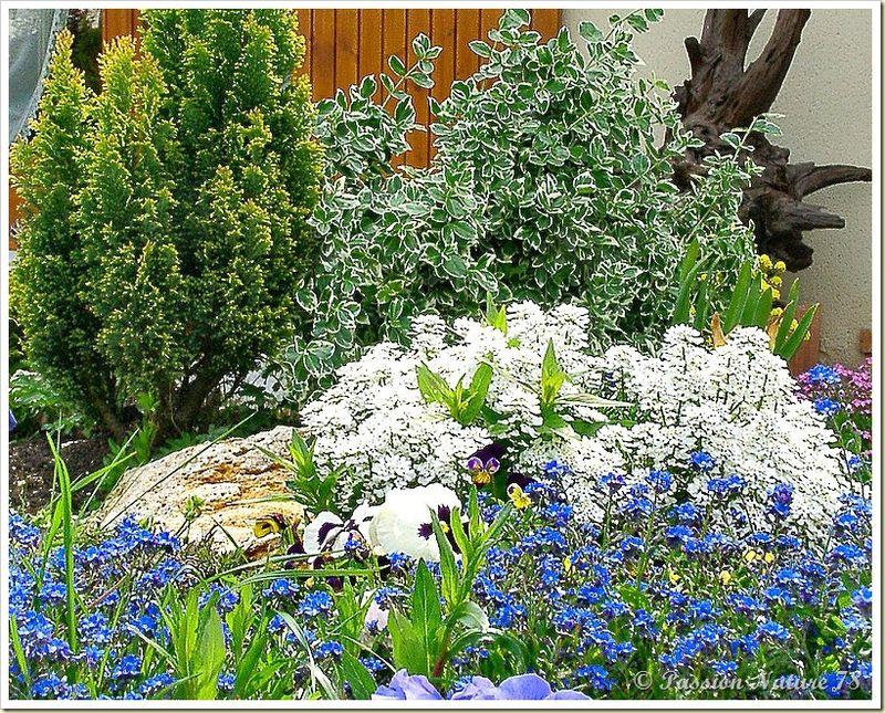 Le jardin de PassionNature78 (10)