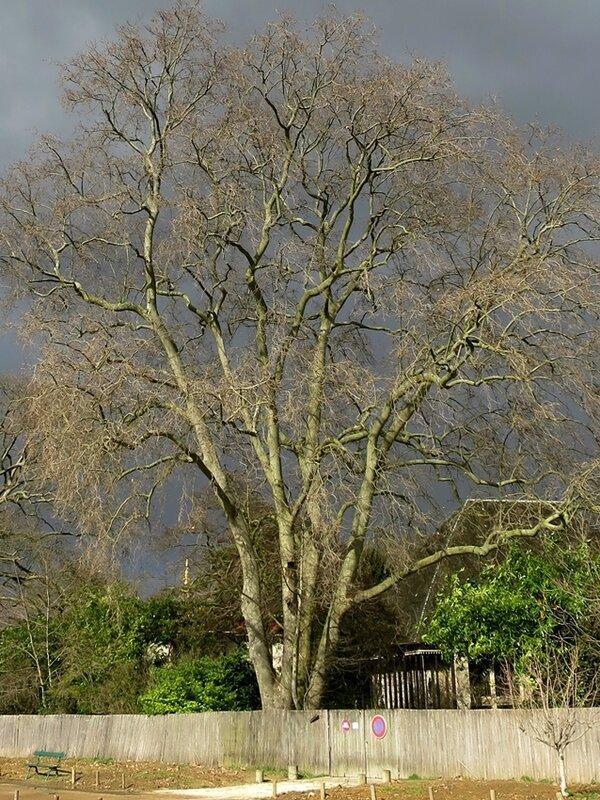 arbre a