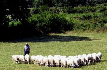 l'agneau des pyrénées savoureux