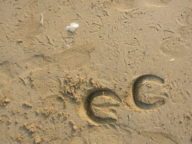 Ouistréham: Chevaux mouettes sable
