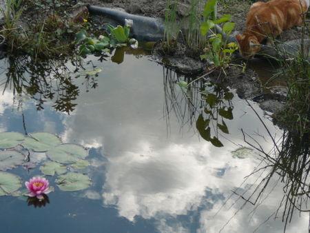 bassin_038