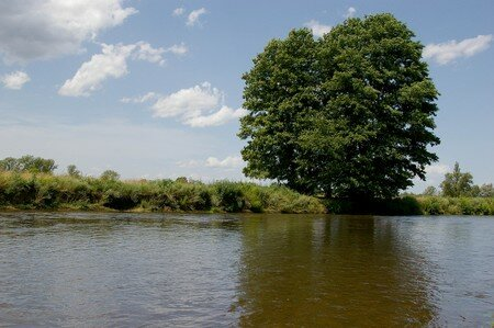 arbre_et_eau