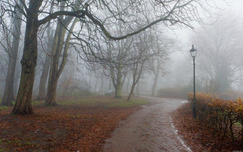 Parc dans la brume