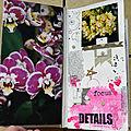 Orchidées-4