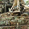 Les aventures de danbo au cambodge #9