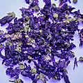 Mauve, violette et coquelicot - chronique france 3 tv de nina moureaux