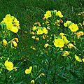 Fleurs de Leon 24061610