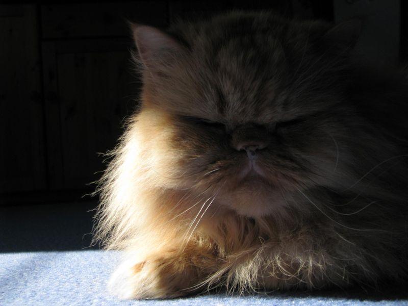 Kitty, 9 ans, ... tout va bien !
