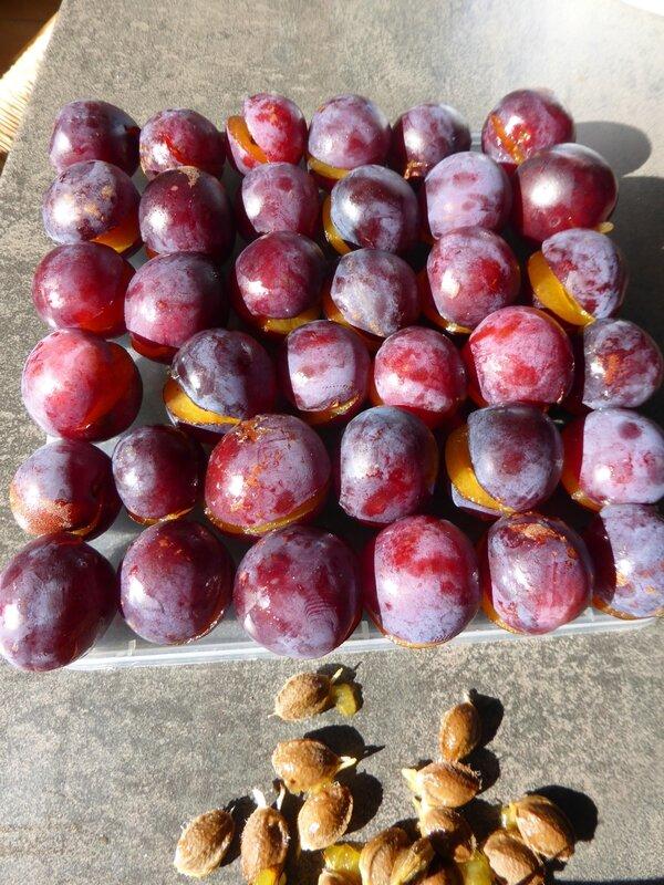 14-prunes Babette (12)