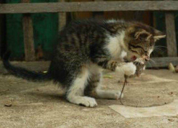 Les chats c 39 est choubidou ecosophie 17 for Le jardin qui bouge