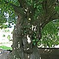 IMG_5036a