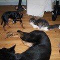 6 avril - Les chiens, c'est bien !