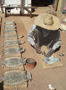 tanneur de peaux d'iguanes MOPTI Mali