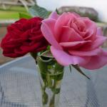 aaa mes roses rouges roses3