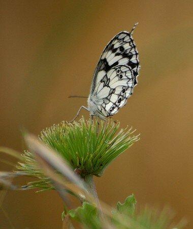 belles_ailes