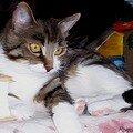 Peinture de Dalila, la minette de JAJA