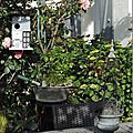 Windows-Live-Writer/Dams-mon-jardin_C73C/DSCN1363_thumb