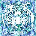 tigre turquoise