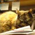 Mimosa sur le bureau: le Gremlins de service