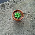 Succulent!!!!