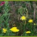 Prairie fleurie 11081512