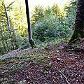 Aperçu de la descente du bois Castilhon...