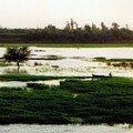 Les rives du Nil au fil de la croisière