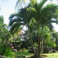 Une vue du superbe jardin de Deshaies