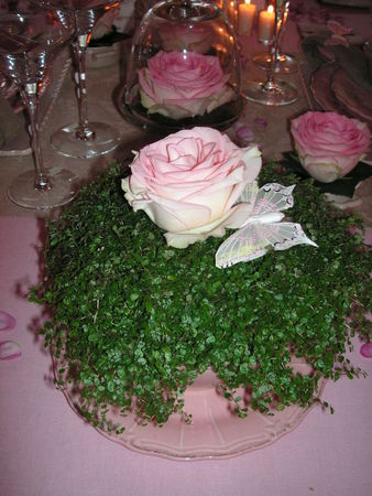 table_rose_f_te_des_m_res_036
